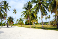 Photograph Glampoing Venue Pamilacan Island Bohol